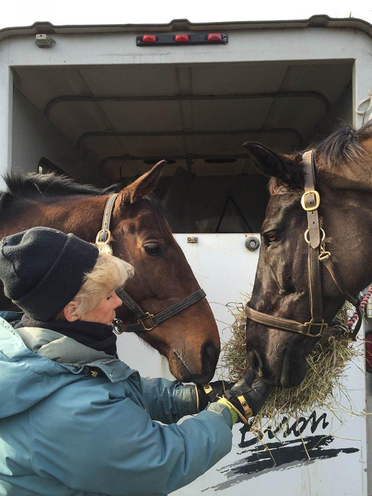 Lisa Reid feeding horses